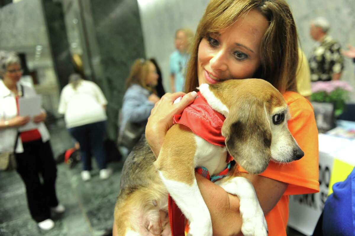 Maureen Davison of the Beagle Rescue Project, right, snuggles with Elsa, 4, who was rescued from an animal testing laboratory, during Animal Advocacy Day on Wednesday, June 3, 2015, at the Legislative Office Building in Albany, N.Y. (Cindy Schultz / Times Union)