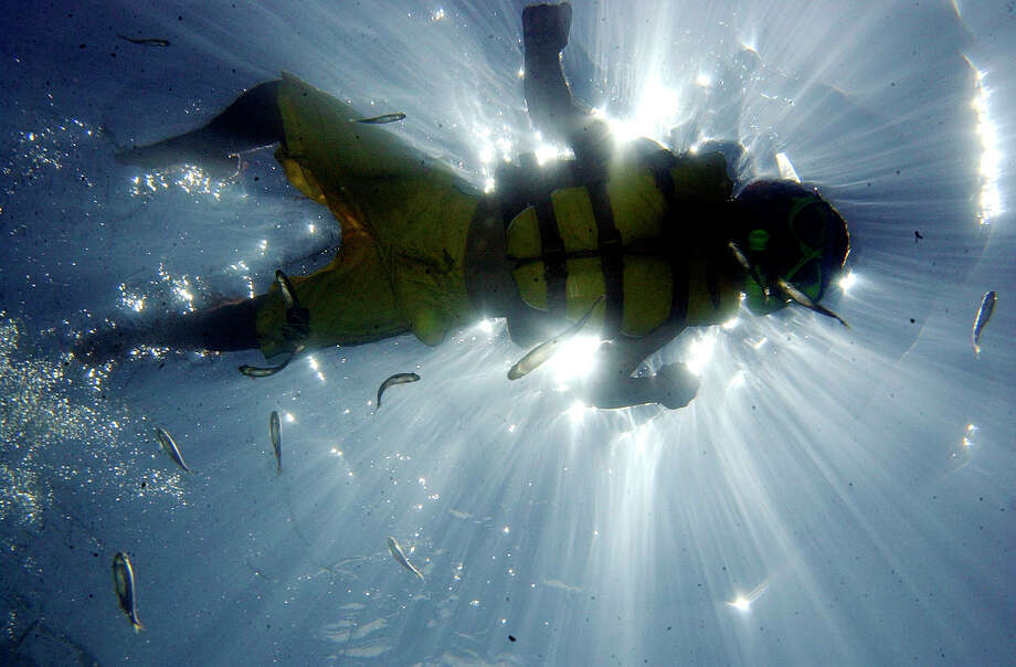A snorkeler swims at Balmorhea State Park in Toyahvale. Balmorea has a spring-fed swimming area with depths up to 30 feet. Photo: LM OTERO, STF / AP