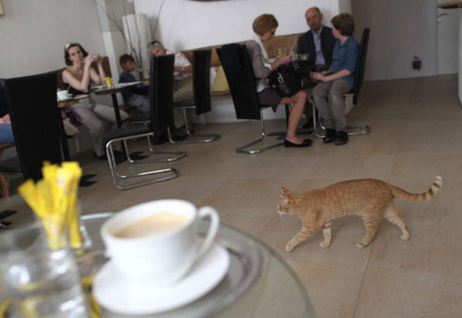 "A cat plays as people drink coffee at the Cafe Neko, in the city center of Vienna on May 7, 2012. Neko, which means cat in the Japanese language, is the first ""cat cafe""  in Vienna, where customers can enjoy a drink while playing with one the five cats of the premises. Photo: AFP, Getty / File  / 2012 AFP"