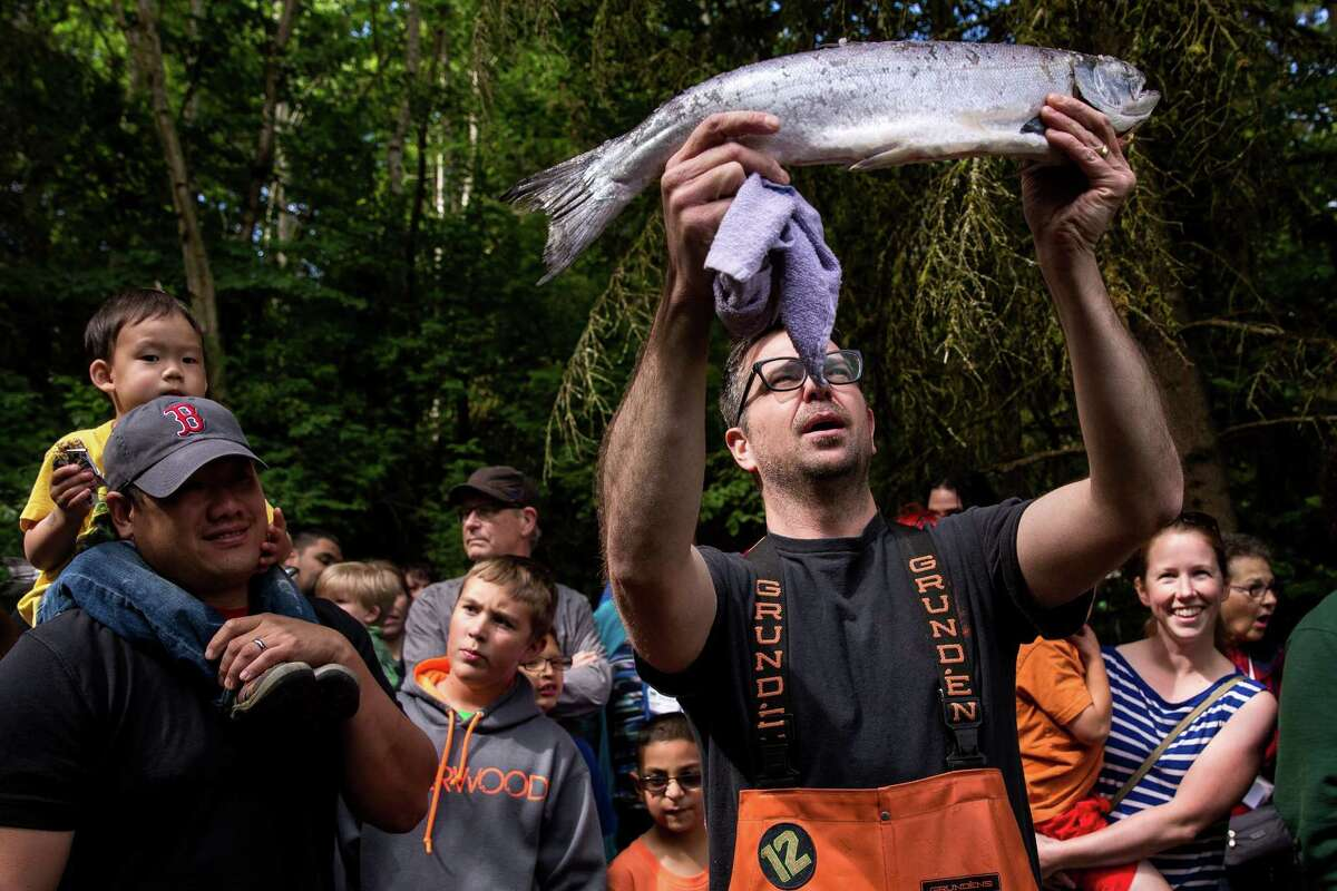 Pike Place Fish Market employees return to Woodland Park Zoo for the annual salmon toss to 21-year-old grizzly bear brothers, Keema and Denali, photographed Thursday, June 4, 2015, in Seattle, Washington. The event paves the way for Saturday's annual