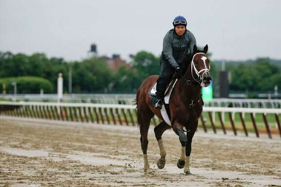 Materiality gets the lay of the land by trotting around the track at Belmont Park. The colt is one of the top contenders in Saturday's 147th Belmont Stakes.