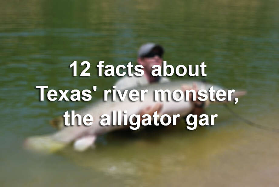 Here are 12 facts you need to know about the misunderstood alligator gar.