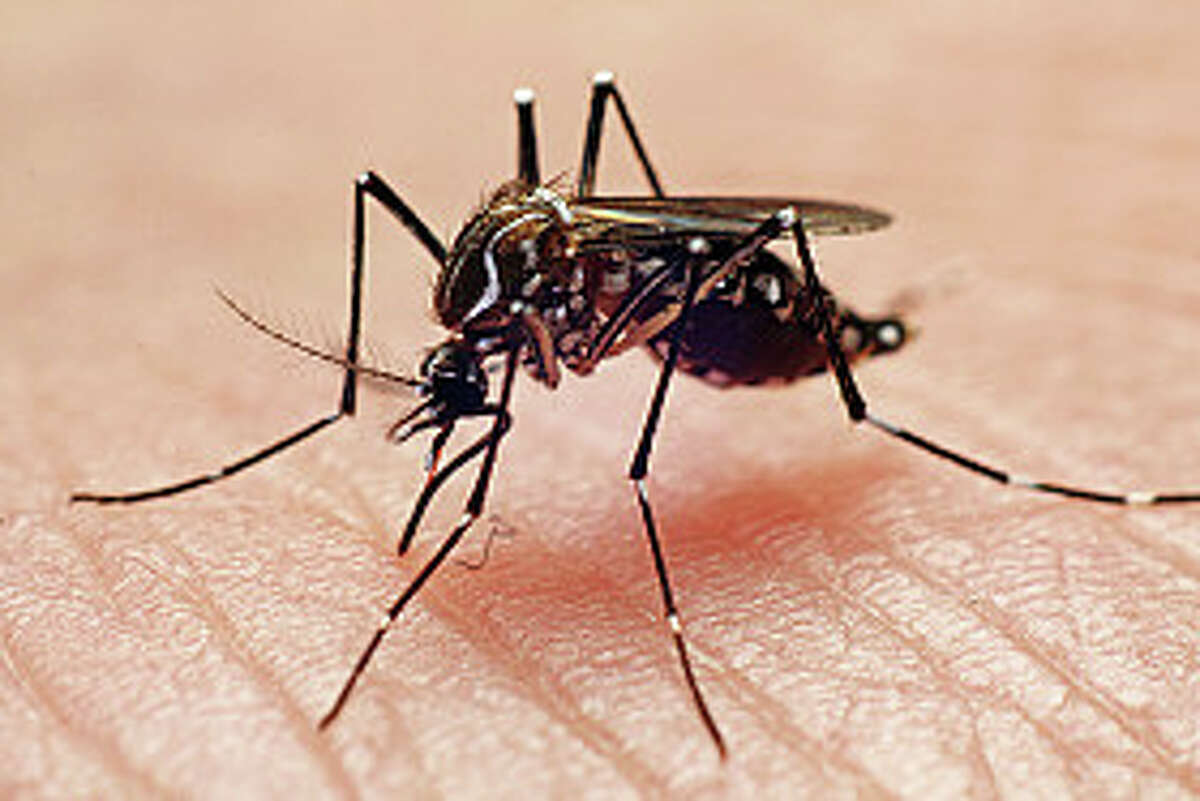 Houstonians give tips for fighting mosquitoes For repellent: