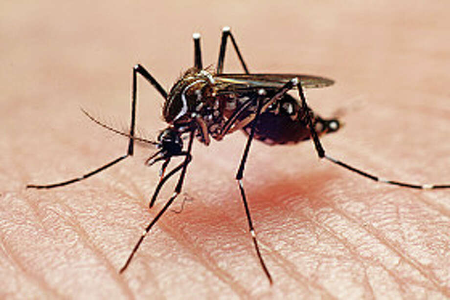"""Houstonians give tips for fighting mosquitoesFor repellent:   """"Drink whiskey."""" Photo: Joao Paulo Burini, Getty Images/Flickr RF / Flickr RF"""