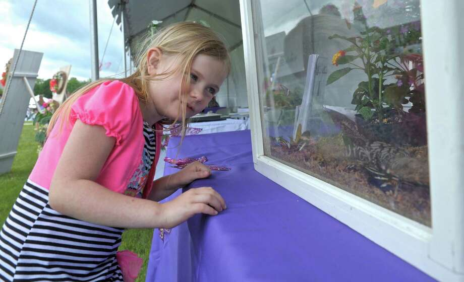 "Zoe Bateman, 7, of Newtown, checks out the butterflies on display by Magic Wings of Deerfield, MA, for the Catherine Violet Hubbard Foundation's second annual ""Butterfly Party"", a community event honoring  Catherine Violet Hubbard, one of the students lost in the Sandy Hook Elementary School shooting. Saturday, June 6, 2015, in Newtown, Conn. Photo: H John Voorhees III, Staff Photographer / The News-Times"