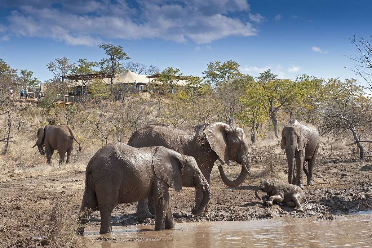 A visit to the Elephant Camp in Victoria Falls is one of the highlights of Great Safaris' new, 12-day African Elephant Safari & Cruise, including Zimbabwe, Botswana and South Africa.