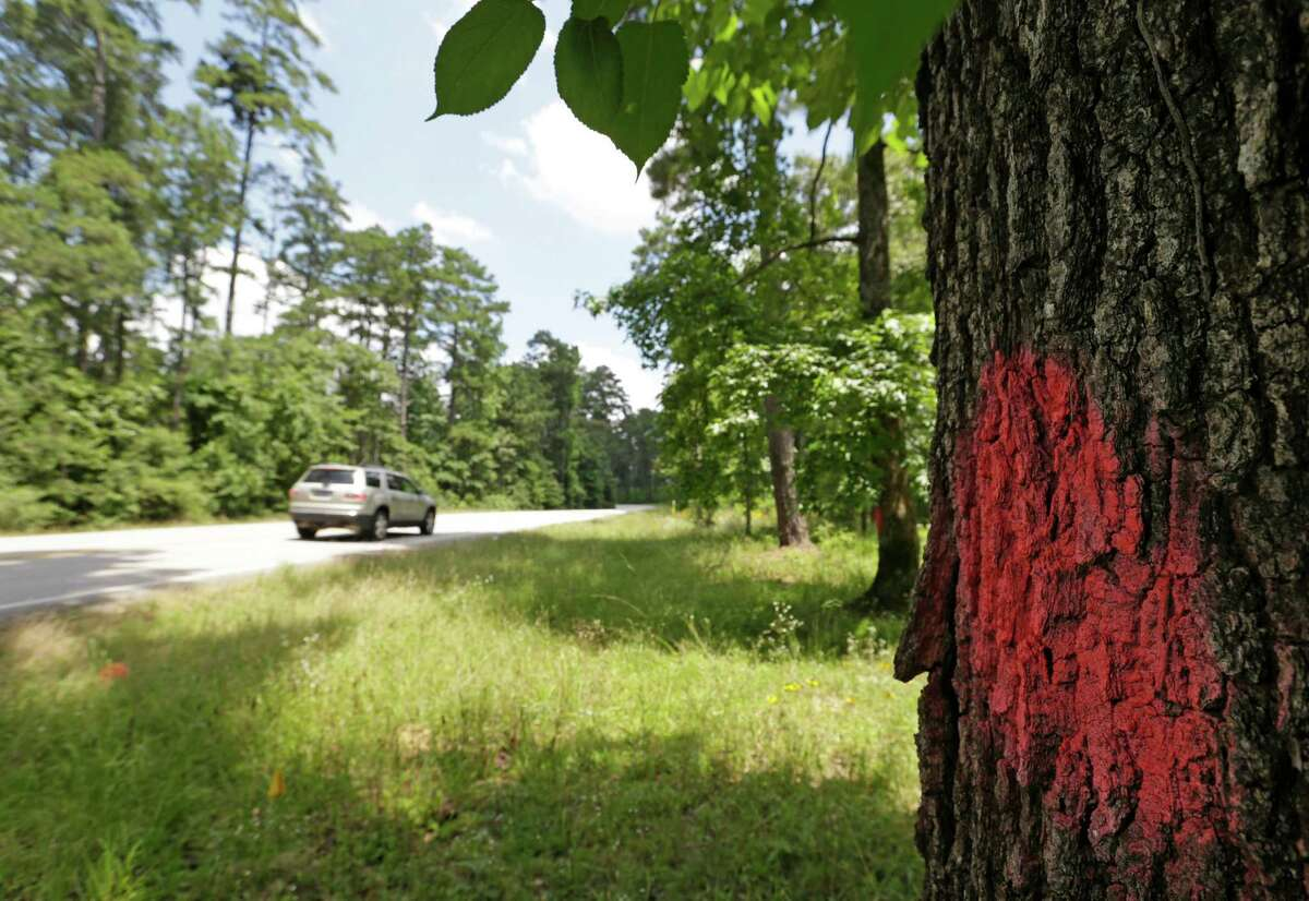 A tree is marked for removal with paint along FM 149 where a five foot shoulder will be added to side of the road that runs through part of the Sam Houston National Forest shown Wednesday, June 3, 2015. TXDOT maintains the road but the U.S. Forest Service will have to tally the trees for the timber value.