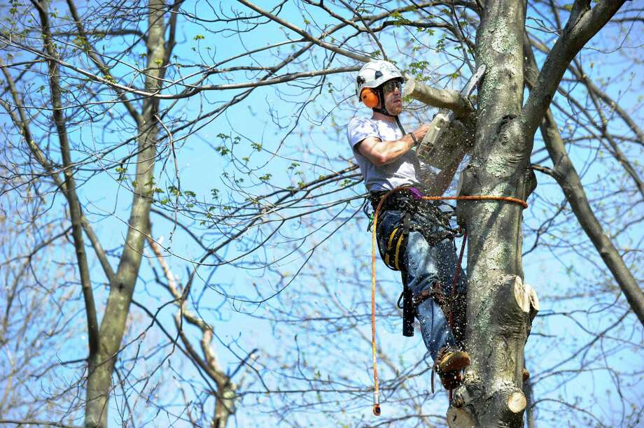 Services jobs are near the all-time high set in Connecticut in July 2000, with the catchall sector covering everything from landscaping to legal services. Jeff Rabito of Danbury, Conn.-based Barts Tree Service is pictured in May 2015. Photo: Carol Kaliff / Staff Photographer / The News-Times