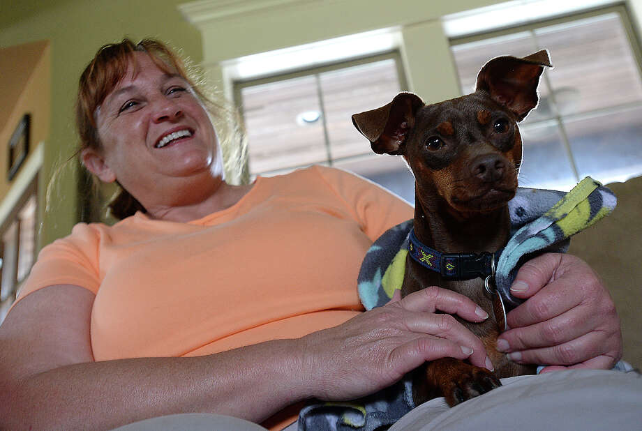 Monica Lemoine calms Victor, one of several rescue dogs that now call her Orange County residence home. Like several of her dogs, Victor was abused, having allegedly been stabbed by a 16-year-old Beaumont boy. Victor was found in a ditch in November, with the full length of a steak knife still lodged within him. The knife had been there for days before he was found. Against all odds, the miniature pincher survived, and Lemoine has since worked to provide him a safe and loving home and ameliorate the lingering effects of his trauma. The District Attorney's office has rejected any plea deals and will be charging Clinton Joseph Johnson as an adult in their upcoming animal cruelty case.   Photo taken Friday, June 5, 2015  Kim Brent/The Enterprise Photo: Kim Brent / Beaumont Enterprise
