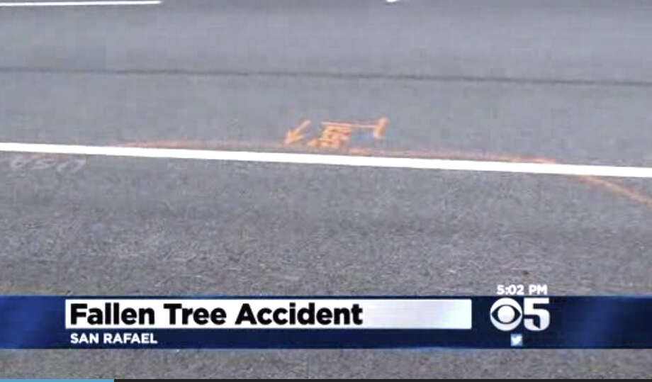The location where a tree fell down along Point San Pedro Road last Tuesday.  A 17 year old jogger was hit by a car trying to go around the tree. Photo: CBS San Francisco