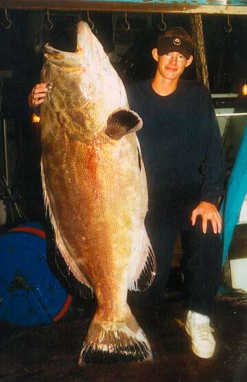 Florida man's black grouper may be new world record