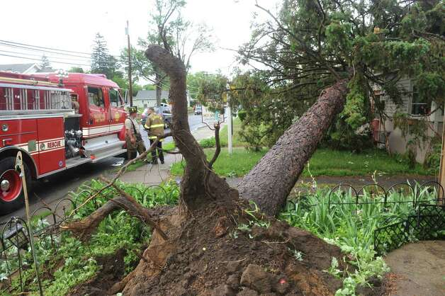 A tree uprooted during a passing storm on Vley Road Tuesday June 9, 2015 in Scotia , N.Y.  (Michael P. Farrell/Times Union) Photo: Michael P. Farrell