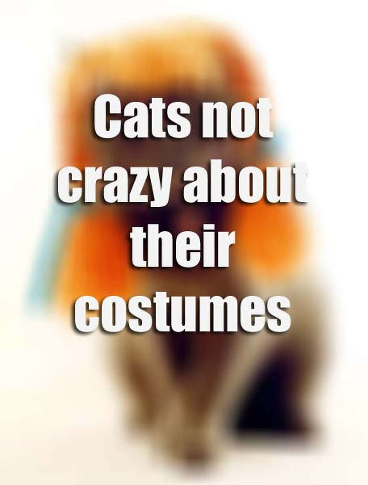These cats are as equally perplexed as you are as to why they're wearing funny outfits.