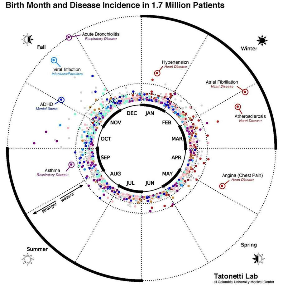 The wheel is a visualization of the statistical relationship between birth month and disease incidence in the electronic records of 1.7 million New York City patients. To see which months the study found to be associated with a high or low risk for a particular disease (but not overall disease risk), continue through the slide show. (Credit: Dr. Nick Tatonetti/Columbia University Medical Center) Photo: Tatonetti Lab