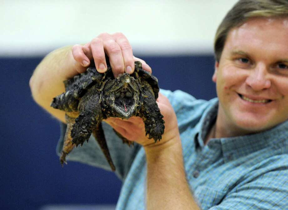 Chris Evers of Animal Embassy holds a snapping turtle during his presentation to children at recent presentation. He will be bringing along some live animals to Stepping Stones Museum for Children in Norwalk, Conn., on Saturday, June 20, 2015. Photo: Carol Kaliff / The News-Times
