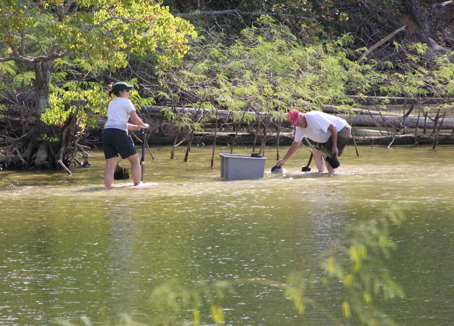 Volunteers with Lake Livingston Friends of Reservoirs plant water-willow in the lake's shallows as part of a cooperative effort among conservation groups, area high schools, state and local government, and others to establish native aquatic vegetation providing multiple benefits for the Trinity River reservoir. Photo: Picasa