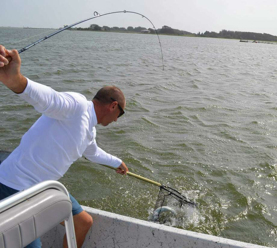 Bringing a nice speckled trout to the net, Capt. Joey Farah is among the area guides finding an ample supply of croakers necessary to put five fish in the boat during his summer time trips in Baffin Bay and the Upper Laguna Madre. Photo: Ralph Winingham / For The Express-News