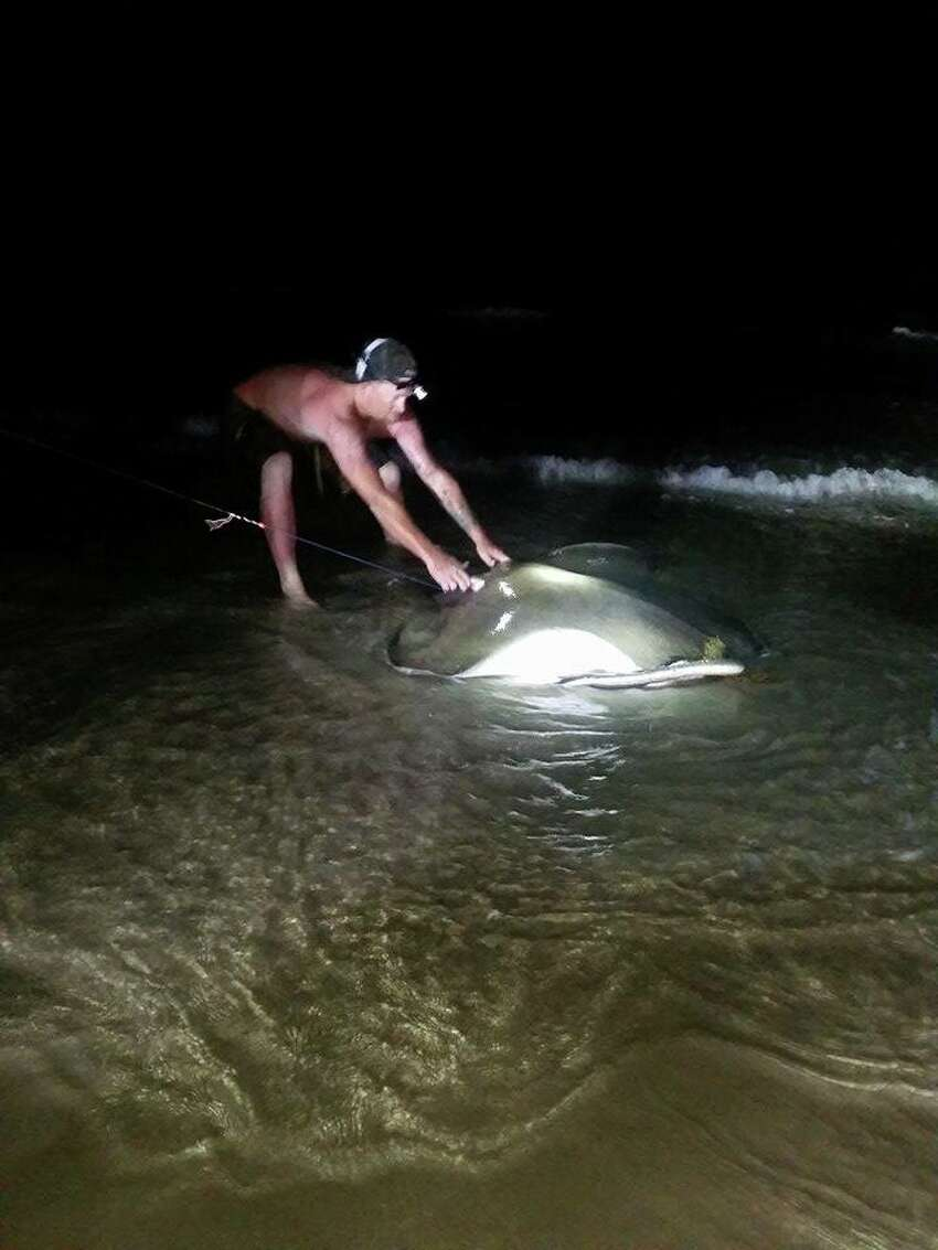 But the giant Southern Stingray was not what Nathan Sadosky expected or wanted while fishing at the Padre Island National Seashore in Corpus.