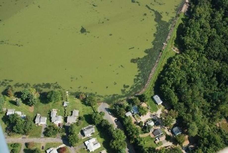 Blue-green algae grows in a Connecticut pond. Photo: Connecticut DEEP