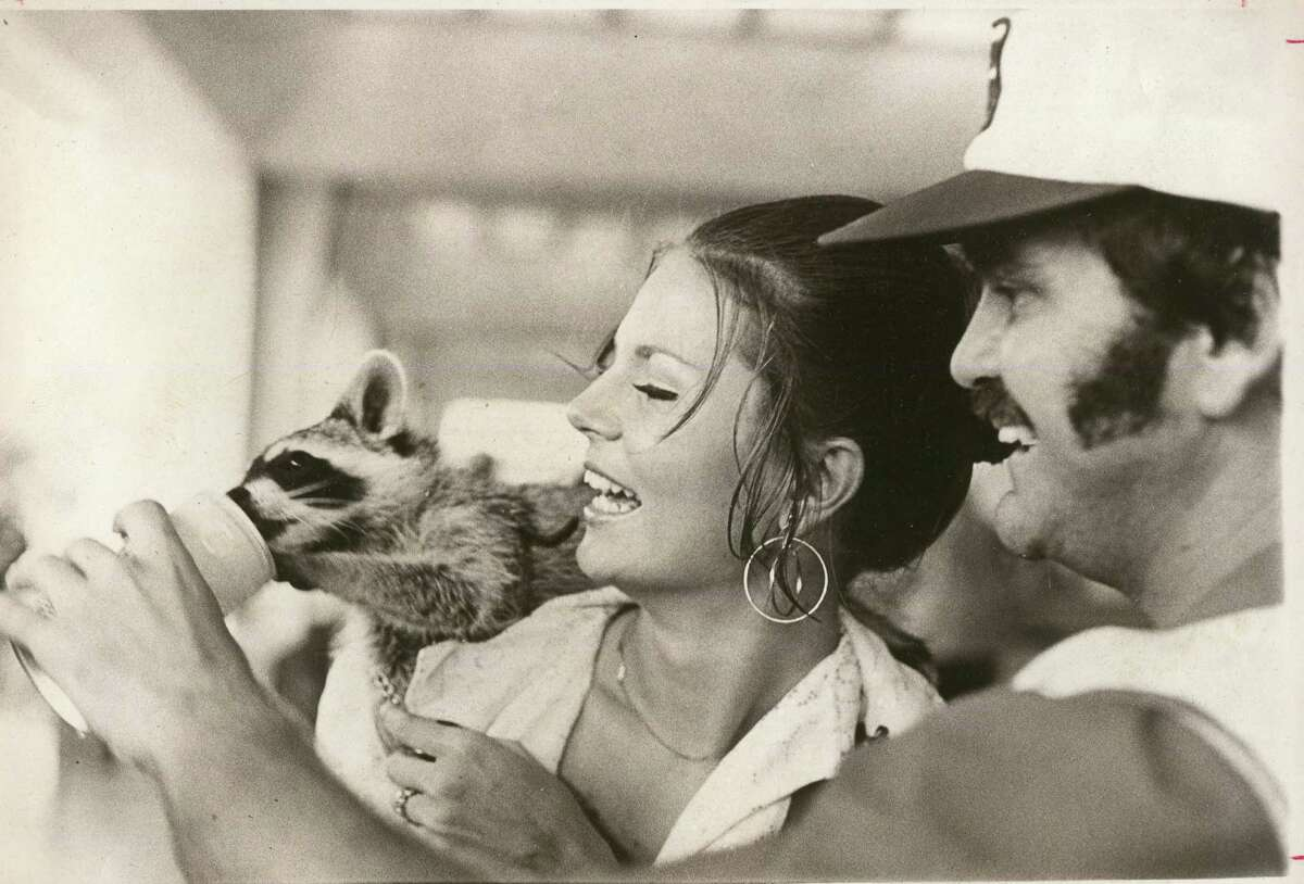 Susan Bennette, Miss Cajun, and W.E. Du Plant, both from Port Aransas, feed Pearl beer to Du Plant's raccoon, Bandit, a the Texas Folklife Festival in 1973.