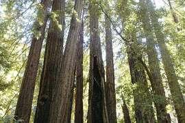 Forests not endangered?