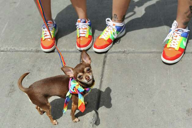 Chula, a teacup Chihuahua, joins his mommies Candace Nichols, left, and Yasmin Delestre of Albany during the Capital PRIDE Parade on Saturday, June 13, 2015, in Albany, N.Y. (Cindy Schultz / Times Union) Photo: Cindy Schultz / 00032232A
