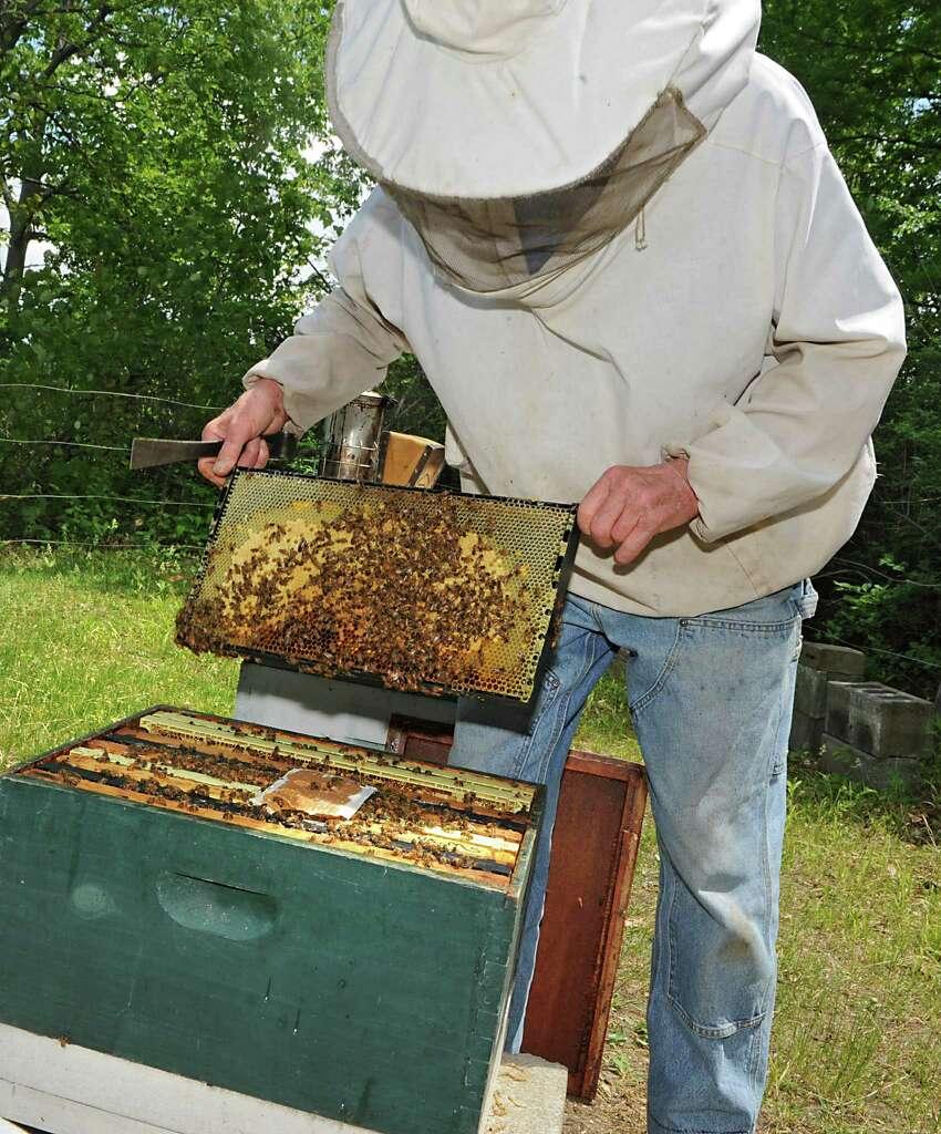 Beekeeping Club - UConn