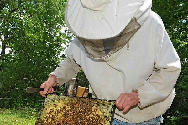 Bee keeper Stephen Wilson removes a frame in one of his bee hives in his back yard on Thursday, May 28, 2015 in Altamont, N.Y.  (Lori Van Buren / Times Union)