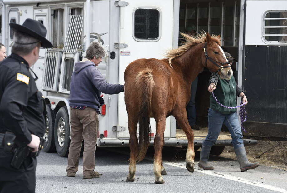 A Saratoga County Sheriff's Deputy keeps a close watch on members of the SPCA and volunteers as they load up one of the 13 endangered horses from the property at 131 Wilton Road in Greenfield earlier this year. (Skip Dickstein/Times Union archive)