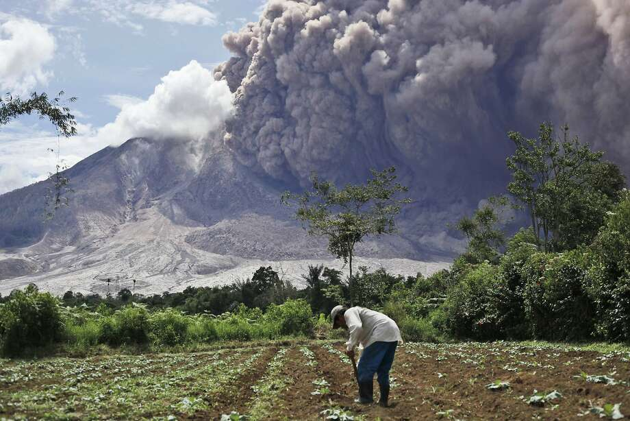A farmer tends to his field as Mount Sinabung releases pyroclastic flows in Tiga Pancur, North Sumatra, Indonesia, Saturday, June 13, 2015. The volcano, which was put on it highest alert level last week, has sporadically erupted since 2010 after being dormant for 400 years.  Photo: Binsar Bakkara, Associated Press