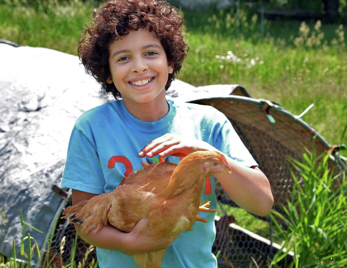 Emmet Vitale-Penniman, 10, with one of their pastured free range chickens at his family's Soul Fire Farm Thursday June 11, 2015 in Grafton, NY. (John Carl D'Annibale / Times Union)