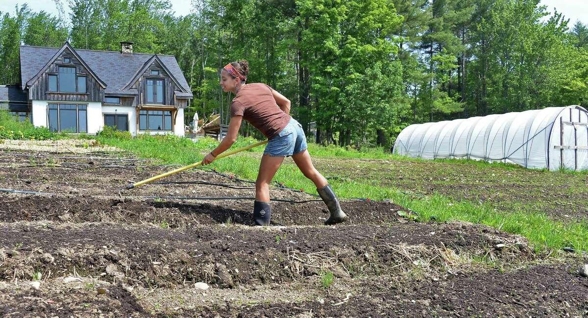 Leah Penniman hoes a row of lettuce at their Soul Fire Farm Thursday June 11, 2015 in Grafton, NY. (John Carl D'Annibale / Times Union)