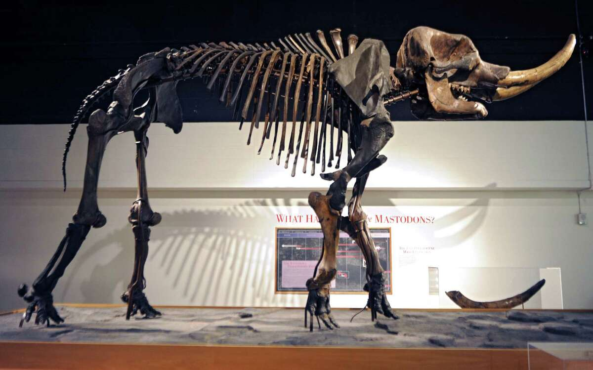 Visit the New York State Museum: Learn about the Empire State's vital role in the Civil War and War of 1812, witness the devastating fire that ravaged the New York State Capitol building in 1911, and get up close and personal with a Cohoes mastodon.