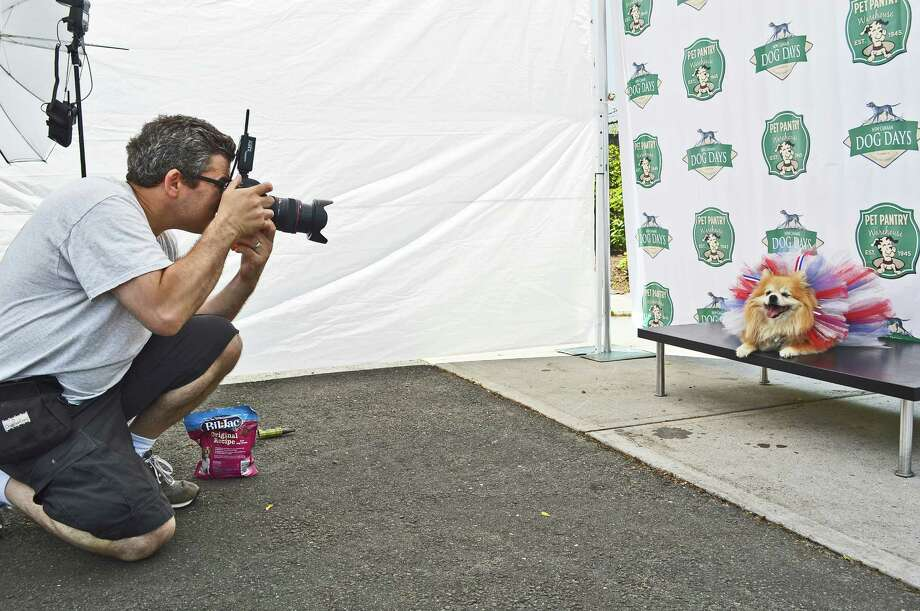 Geoff Tischman of Tischman Pets Photography in Rye, N.Y., gets a portrait of smiling Amber at the Sixth Annual New Canaan Dog Days event in New Canaan, Connecticut, on Sunday, June 14, 2015. Photo: Jarret Liotta / Contributed Photo / New Canaan News