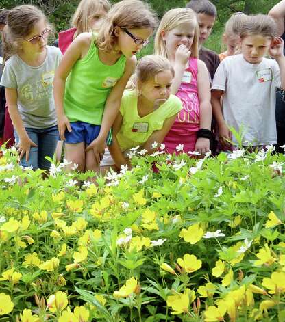 Second graders from Berne Knox Westerlo Elementary School look for pollinators in the butterfly garden at the Thacher Nature Center Tuesday June 16, 2015 in Voorheesville, NY.  (John Carl D'Annibale / Times Union) Photo: John Carl D'Annibale / 00032297A