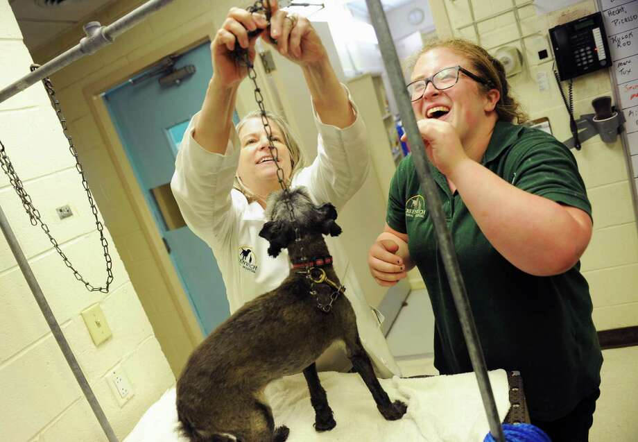 Greenwich High School graduating senior Audrey Niblo, right, gets a hand from Practice Manager Linda Wise before grooming Cinder, a 14-year-old mixed breed, while working at Greenwich Animal Hospital in Greenwich, Conn. Thursday, June 11, 2015.  Niblo is doing her GHS senior internship at the animal hospital to fulfill her high school graduation requirements while getting a glimpse of real work experience to help determine if veterinary medicine is something she would be interested in pursuing when she starts college at St. Bonaventure University. Photo: Tyler Sizemore / Hearst Connecticut Media / Greenwich Time