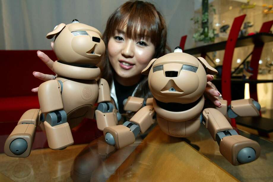 """New models of Sony's entertainment robot """"AIBO"""" are on display in Tokyo Friday, May 17, 2002. The brown robot pug dog will go on sale on May 25 at the price of 69,000 yen (U.S. 543 dlrs). Photo: SHIZUO KAMBAYASHI, AP / AP"""