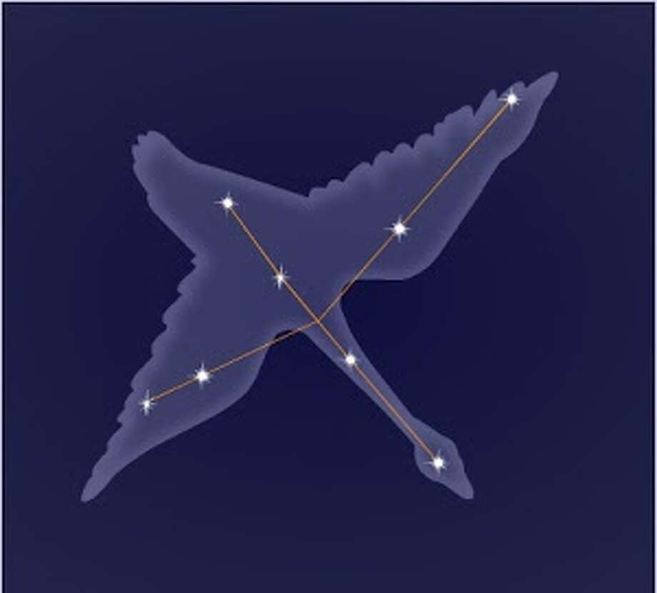 Cygnus, the Swan