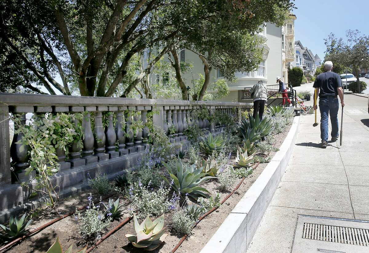 The new stairway park on the west side now has native plants beneath tall coastal oak trees Thursday June 18, 2015. A stairway honoring urban explorer Adah Bakalinski near the east side of Buena Vista Park in San Francisco, Calif. will feature picturesque views, a new balustrade and colorful vegetation.