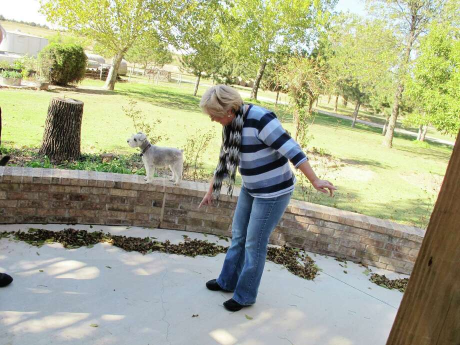 FILE - In this Oct. 24, 2013 file photo, Prague, Okla. resident Mary Reneau, 70, points to the hairline cracks that have formed in the concrete of her patio that she says were caused by several earthquakes that have rumbled through her town in the past two years. The more and faster oil and gas companies pump their saltwater waste into the ground, the more they have triggered earthquakes in the central United States, a massive new study from the University of Colorado found. Results were published in the journal Science on Thursday, June 18, 2015. Although Texas, Arkansas, Kansas and other states have seen increases in earthquakes, the biggest jump has been in Oklahoma. (AP Photo/Justin Juozapavicius) Photo: Justin Juozapavicius, STF / AP