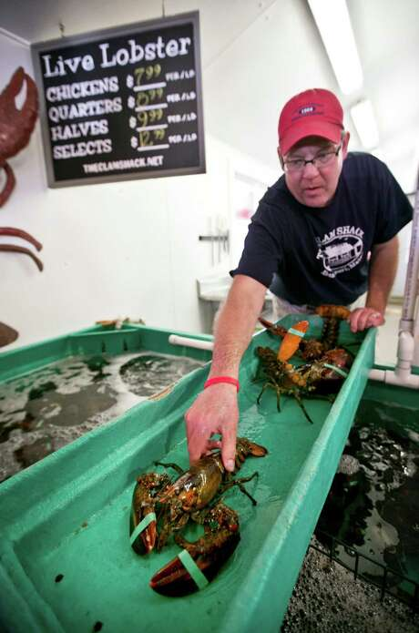 Steve Kingston, owner of the Clam Shack in Kennebunkport, Maine, sorts lobsters at his restaurant. American lobster prices are on the rise. Photo: Robert F. Bukaty, STF / AP