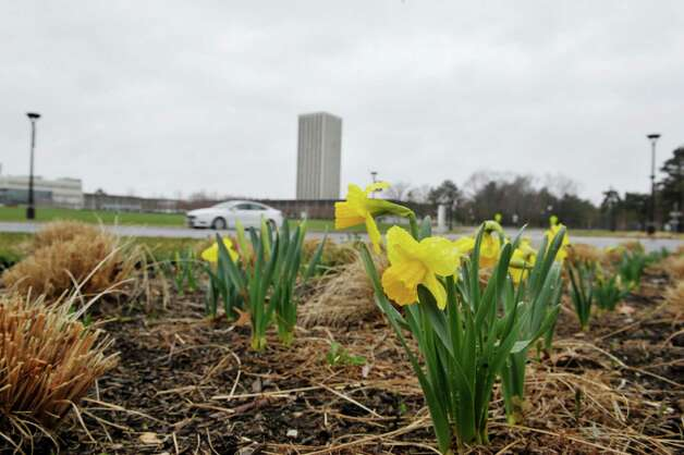 Flowers bloom at an entrance to University at Albany on Monday, April 20, 2015, in Albany, N.Y.  (Paul Buckowski / Times Union) Photo: PAUL BUCKOWSKI / 00031536A