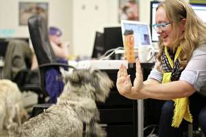12 most dog-friendly offices in the U.S. - Photo