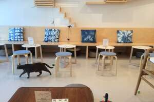 KitTea, San Francisco's very first cat cafe, opens next week in Hayes Valley - Photo