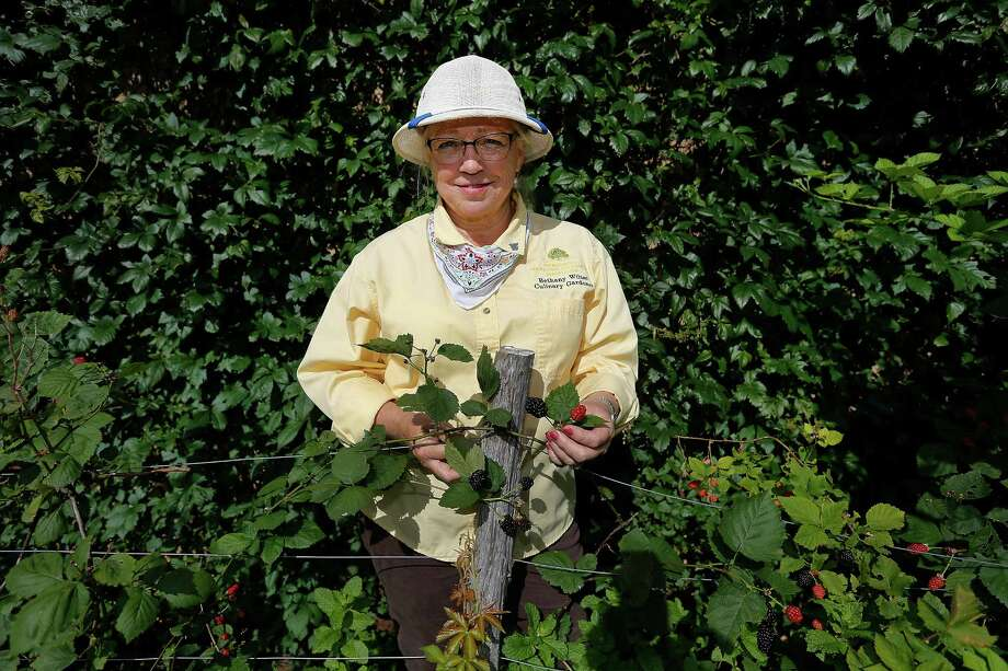 Culinary gardener Bethany Wiltse-Emick poses by blackberries growing in a garden at the JW Marriott San Antonio Hill Country Resort. Wiltse-Emick has overseen the gardens since 2011 and provides tours every Saturday at the resort. Photo: Kin Man Hui /San Antonio Express-News / ©2015 San Antonio Express-News
