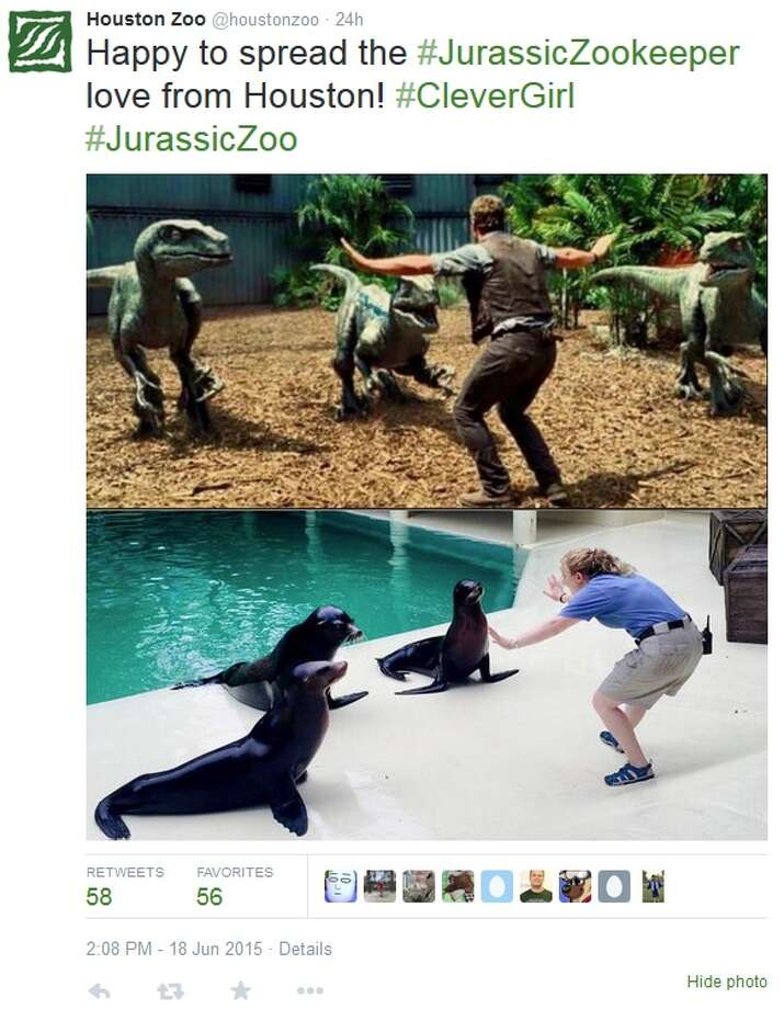 """Zookeepers across the world, including here in Houston, are recreating a scene from the new """"Jurassic World"""" flick with not dinosaurs, but with fearsome creatures like parrots, pigs, and flamingos. Photo: File"""