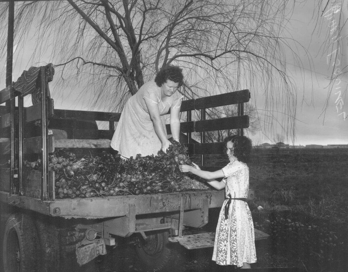Belgian farmers worked to speed up vegetable production during the war. Tillie Van De Hende, on truck, assists Mary Esquivel in this 1942 photo.