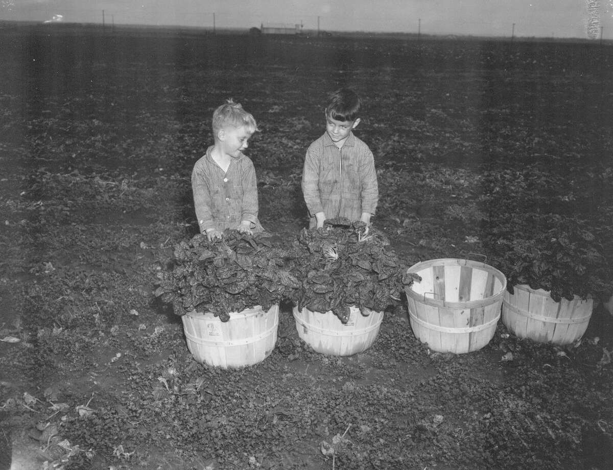 Gilbert Persyn and Gerald Persyn are shown in a field with bushel baskets of spinach in this 1942 photo.