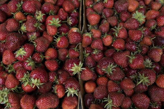 Strawberries sit in a customer's vehicle at Plow Creek Farm in Tiskilwa, Illinois, U.S., on Tuesday, June 9, 2015. U.S. strawberry production fell 14.5 percent in April compared to last year, according to the most recent report by the U.S. Department of Agriculture. Photographer: Daniel Acker/Bloomberg