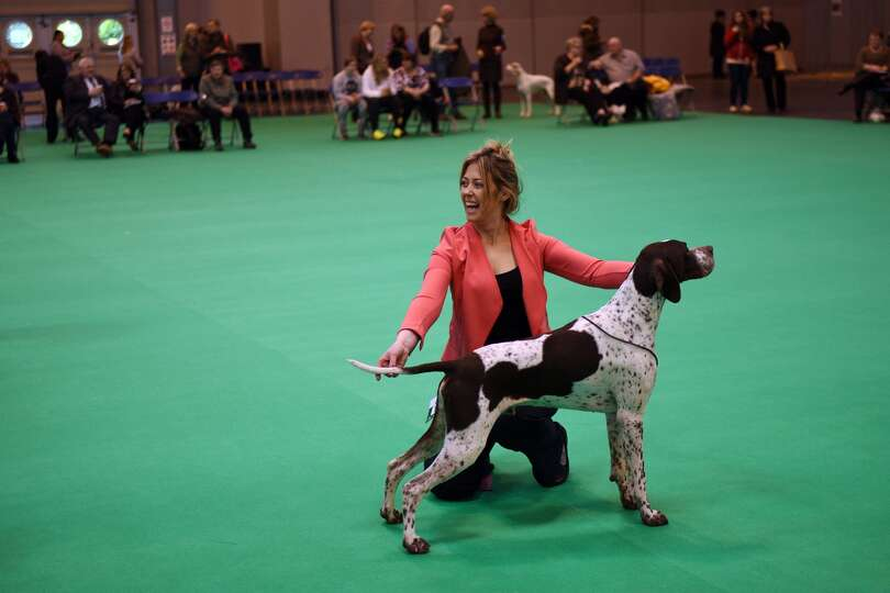 A woman shows her Pointer dog on the first day of the Crufts dog show at the National Exhibition